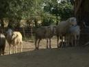 Ekološka kmetija Berden