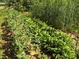 Eko vrtnarjenje z dobrimi sosedi
