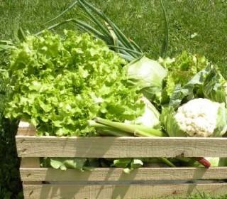 Zagotovite si svoj EKO zabojček s svežo eko hrano!