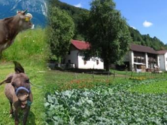 Ekološka kmetija Marija in Aljoša Bončina
