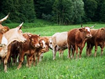 Ekološka kmetija Matej Zadravec